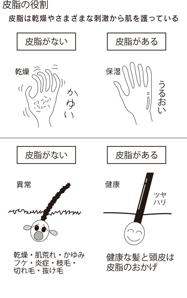 皮膚の役割